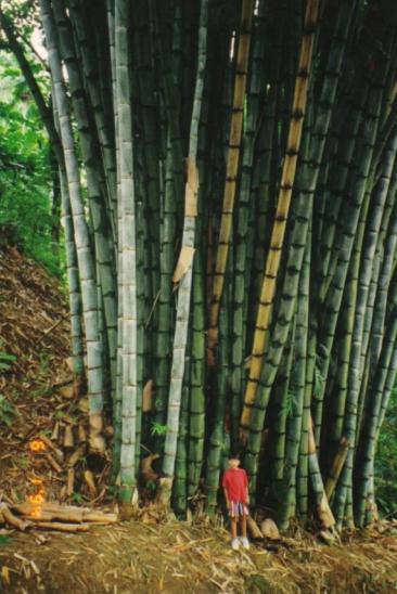 Kebun Raya Bogor Perpaduan Tempat Wisata Alam Dan Musium