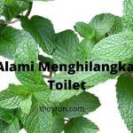8 Cara Alami Menghilangkan Bau Toilet